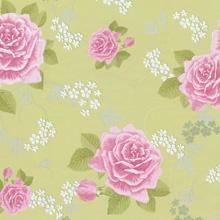 格莱美 薇拉玫瑰墙纸